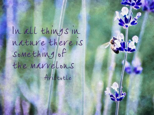 bee-and-lavender-with-quote-marion-mccristall