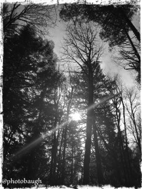 forestparkfeb2016-1