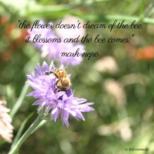 bee-flower-quote