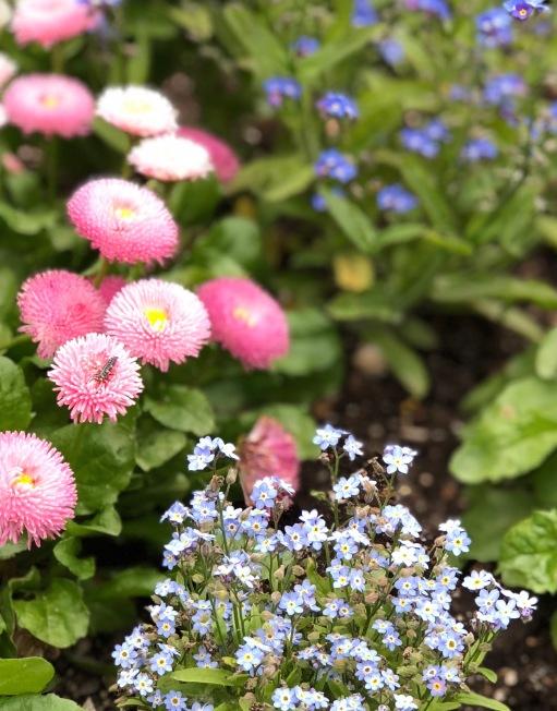 slc-flower1